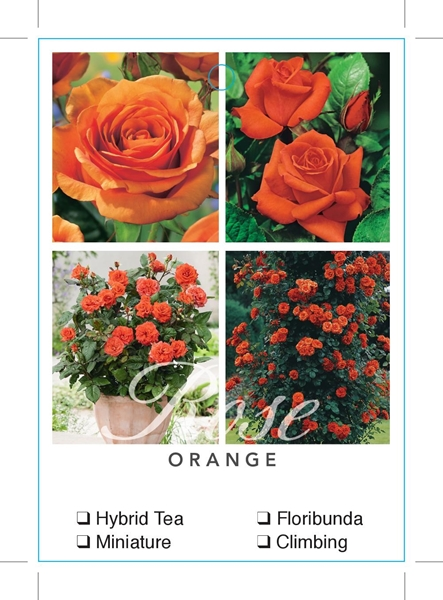 Picture of ROSE ORANGE (UNNAMED VARIETY TICK BOX)