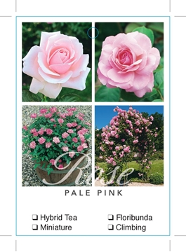 Picture of ROSE PALE PINK (UNNAMED VARIETY TICK BOX)