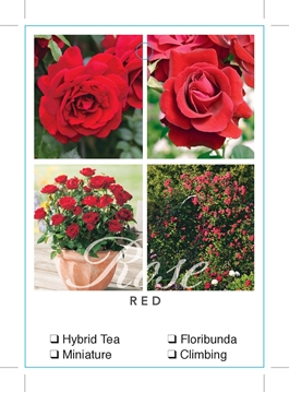 Picture of ROSE RED (UNNAMED VARIETY TICK BOX)