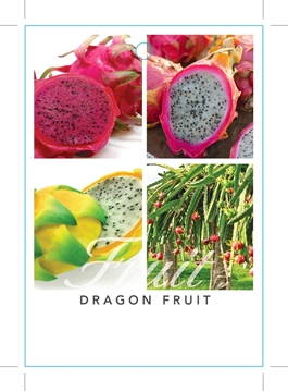 Picture of FRUIT DRAGON FRUIT Hylocereus undatus