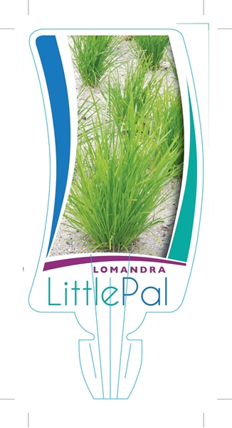 Picture of LOMANDRA LITTLE PAL