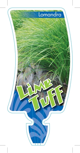 Picture of LOMANDRA LIME TUFF