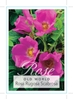 Picture of ROSE ROSA RUGOSA SCABROSA (OW)