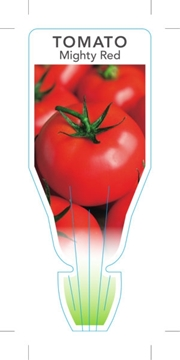 Picture of **VEGETABLE TOMATO MIGHTY RED Lycopersicon esculentum