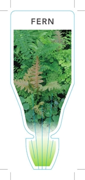 Picture of FERN MIXED PICTURE (UNNAMED VARIETY)