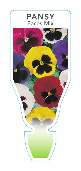 Picture of ANNUAL PANSY FACES MIX (Viola x wittrockiana)