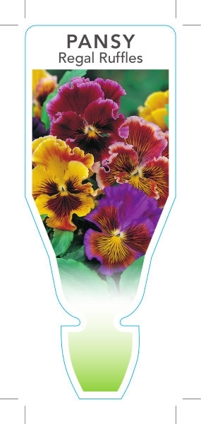 Picture of **ANNUAL PANSY REGAL RUFFLES (Viola x wittrockiana)