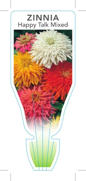 Picture of ANNUAL ZINNIA HAPPY TALK MIXED  (Zinnia elegans)