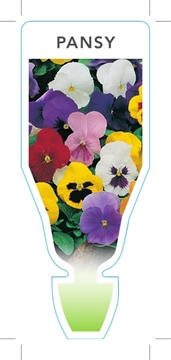 Picture of ANNUAL PANSY MIXED PICTURE (UNNAMED VARIETY) (Viola x wittrockiana)