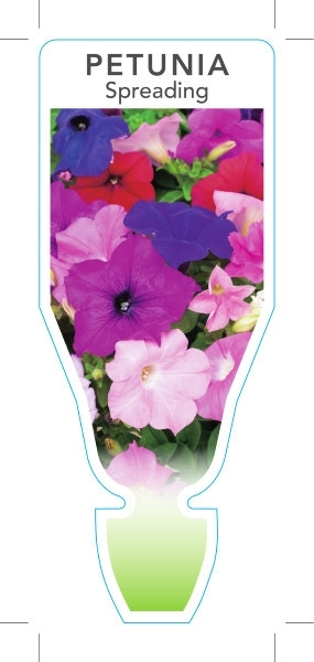 Picture of **ANNUAL PETUNIA SPREADING TYPE MIXED PICTURE (Petunia x hybrida)