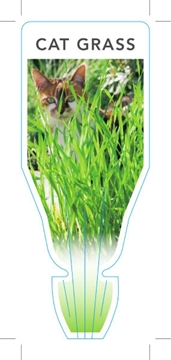 Picture of HERB CAT GRASS (Dactylis glomerata)