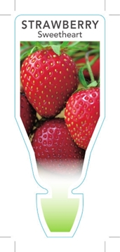 Picture of FRUIT STRAWBERRY SWEETHEART (Fragaria ananassa)