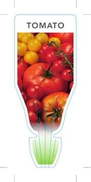 Picture of VEGETABLE TOMATO (UNNAMED VARIETY) (Lycopersicon esculentum)