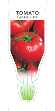 Picture of VEGETABLE TOMATO GROSSE LISSE (Lycopersicon esculentum)