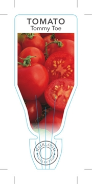 Picture of VEGETABLE TOMATO HEIRLOOM TOMMY TOE (Lycopersicon esculentum)