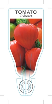 Picture of VEGETABLE TOMATO HEIRLOOM OXHEART (Lycopersicon esculentum)
