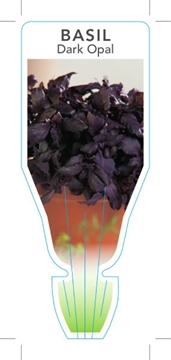 Picture of **HERB BASIL DARK OPAL (Ocimum basilicum)