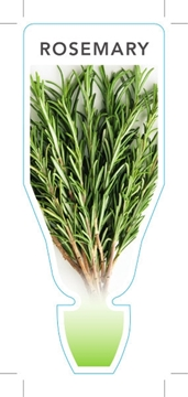 Picture of HERB ROSEMARY (Rosmarinus officinalis)