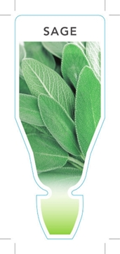 Picture of HERB SAGE (Salvia officinalis)