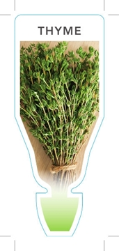 Picture of HERB THYME (Thymus vulgaris)