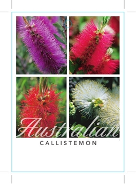 Picture of CALLISTEMON - MIXED PICTURE (UNNAMED VARIETY)