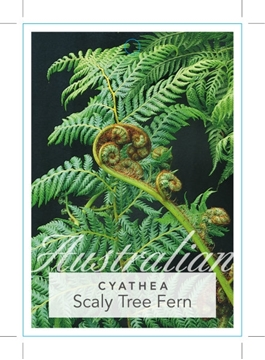 Picture of FERN CYATHEA COOPERI SCALY TREE FERN