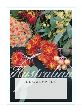 Picture of EUCALYPTUS - MIXED PICTURE (UNNAMED VARIETY)