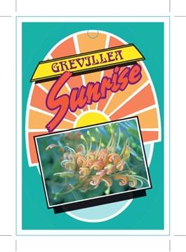 Picture of **GREVILLEA SUNRISE