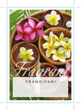 Picture of PLUMERIA FRANGIPANI (UNNAMED VARIETY)