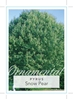 Picture of PYRUS NIVALIS SNOW PEAR