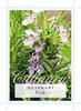Picture of **ROSMARINUS OFFICINALIS PINK ROSEMARY
