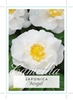 Picture of **CAMELLIA ANGEL