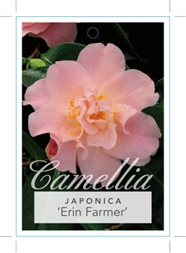 Picture of **CAMELLIA ERIN FARMER