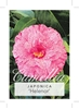 Picture of **CAMELLIA HELENOR