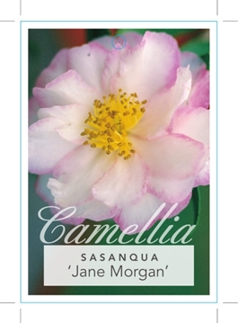 Picture of **CAMELLIA JANE MORGAN