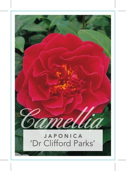 Picture of **CAMELLIA DR CLIFFORD PARKS