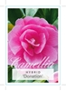Picture of **CAMELLIA DONATION