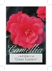 Picture of **CAMELLIA GREAT EASTERN