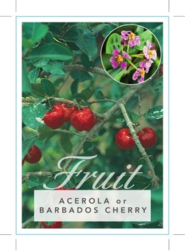 Picture of FRUIT ACEROLA OR BARBADOS CHERRY