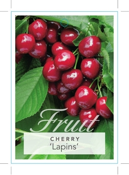 Picture of FRUIT CHERRY LAPINS