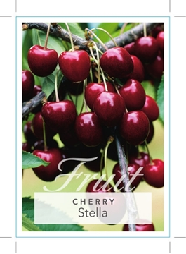 Picture of FRUIT CHERRY STELLA