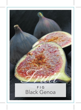 Picture of FRUIT FIG BLACK GENOA