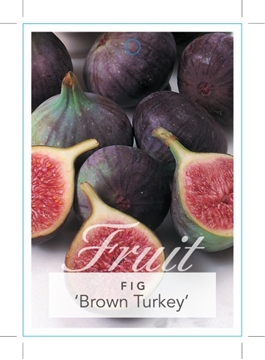 Picture of FRUIT FIG BROWN TURKEY