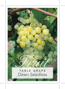 Picture of **FRUIT GRAPE DAWN SEEDLESS