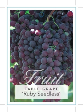 Picture of FRUIT GRAPE RUBY SEEDLESS