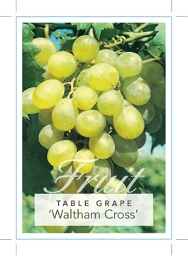 Picture of **FRUIT GRAPE WALTHAM CROSS