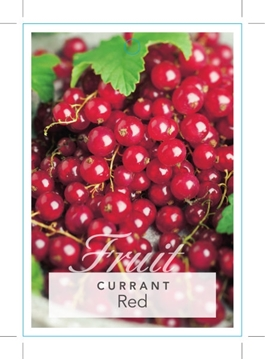 Picture of **FRUIT CURRANT RED Ribes rubrum