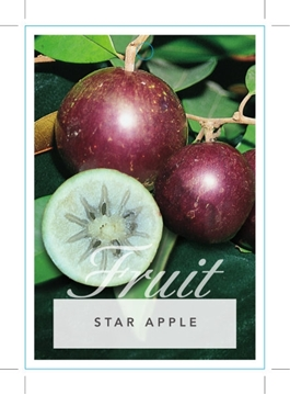 Picture of **FRUIT STAR APPLE OR CAIMITO