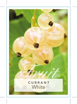 Picture of **FRUIT CURRANT WHITE Ribes sp