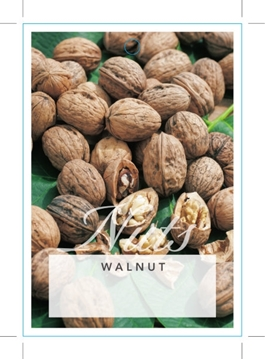 Picture of **NUT WALNUT (UNNAMED VARIETY)